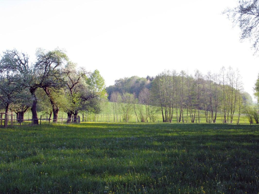 Grünkraut Naturschutzgebiet Wasenmoos