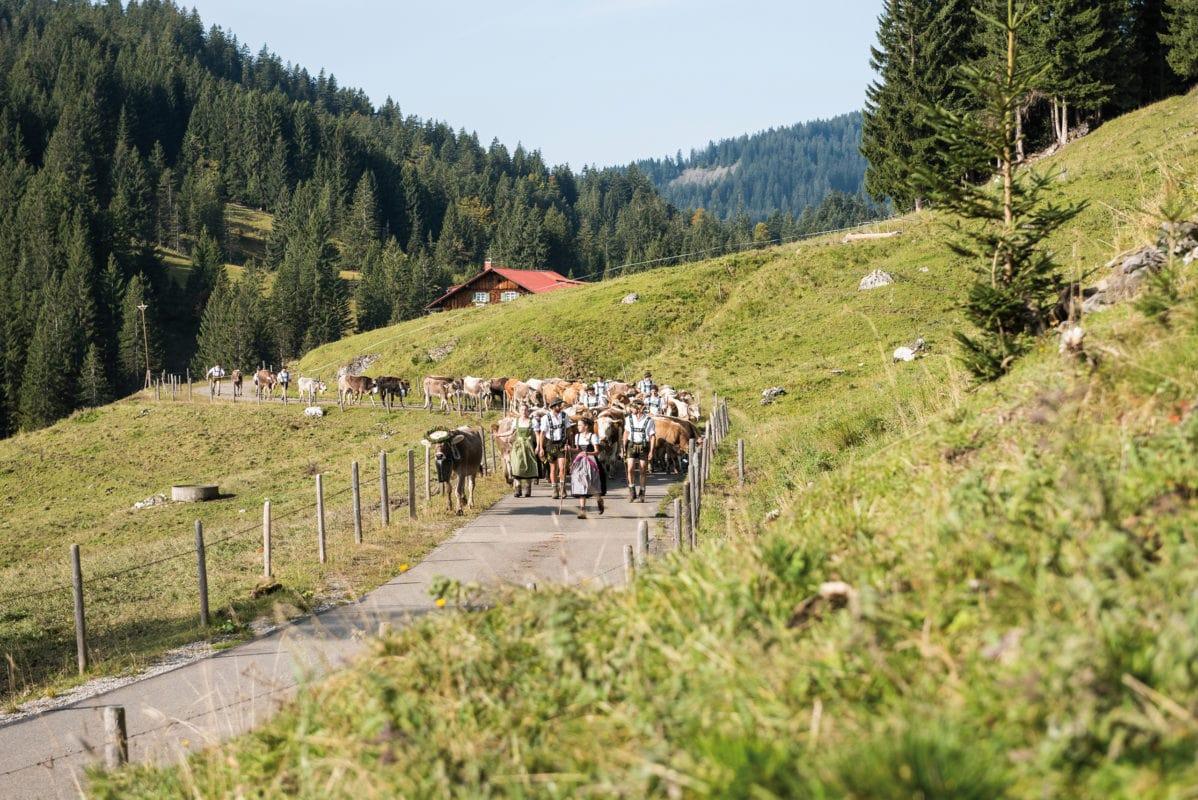 Obermaiselstein Almabtrieb