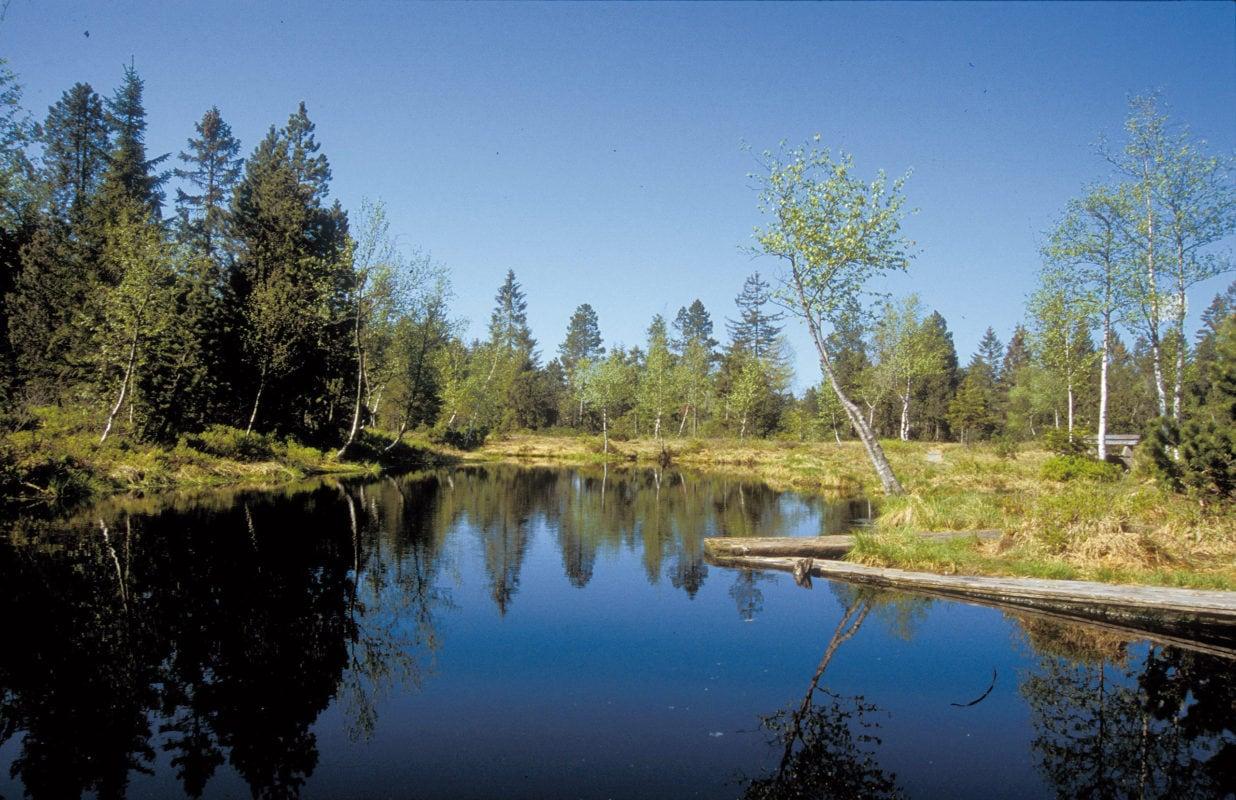 Oberreute Moorweiher