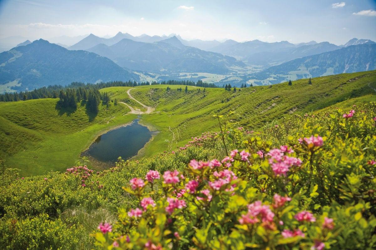 Wertach Alpenrosen-Panorama