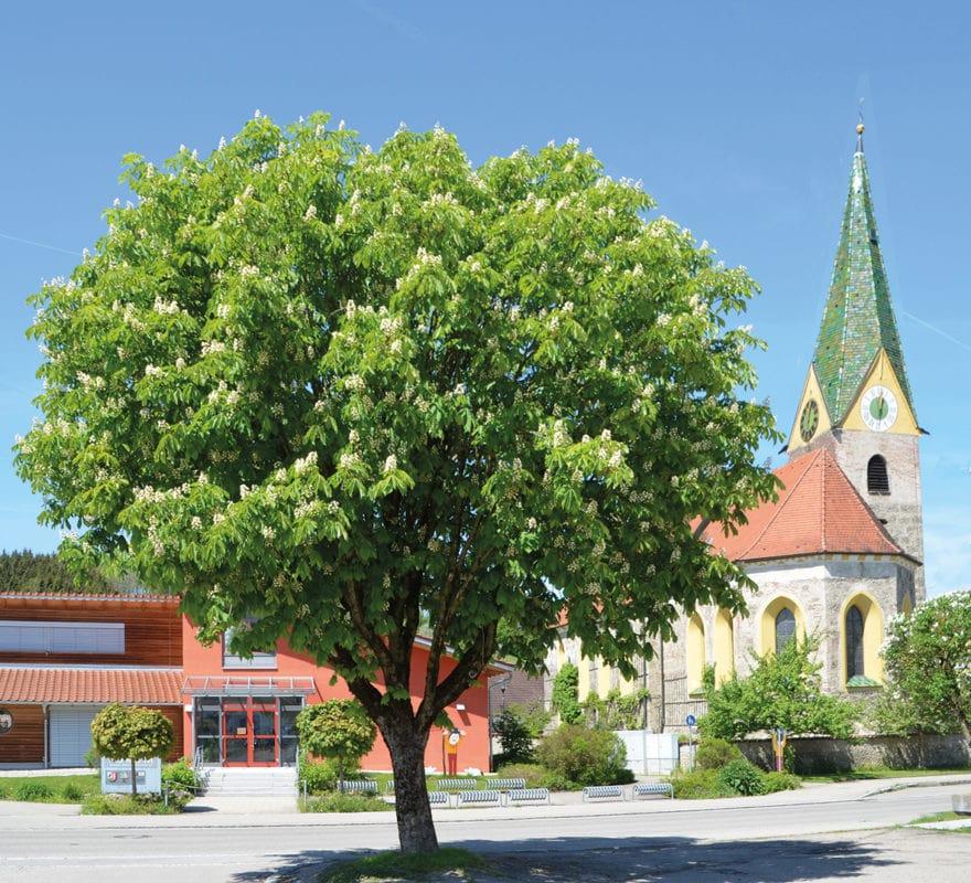 Woringen Pfarrkirche Unser Frauen